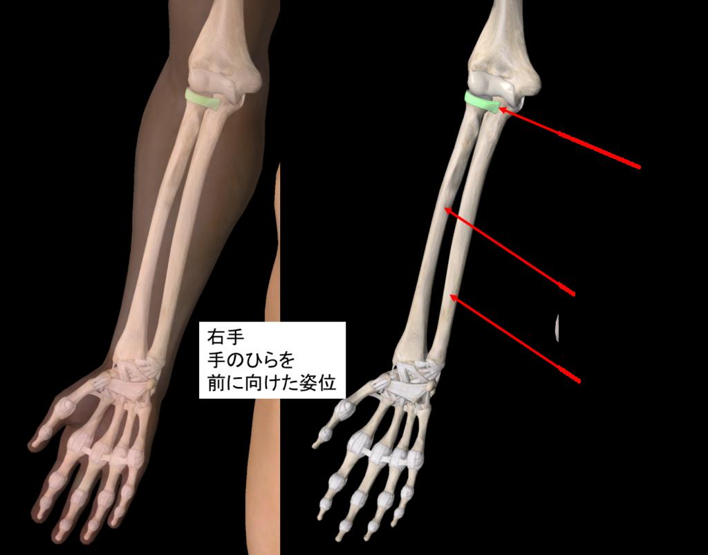 肘内障の痛む箇所